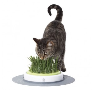 Cat-it Design Senses Grass Garden Kit