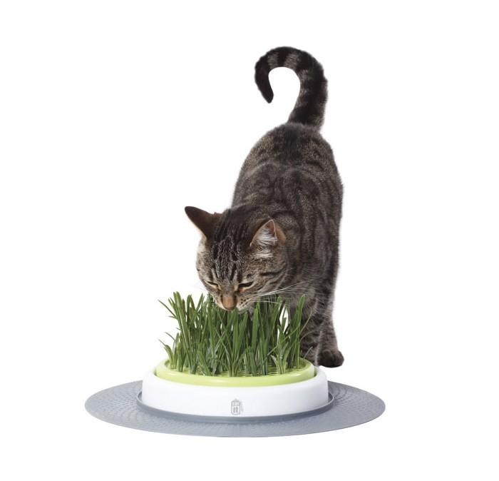 Cat-it Design Senses Grass Garden Kit
