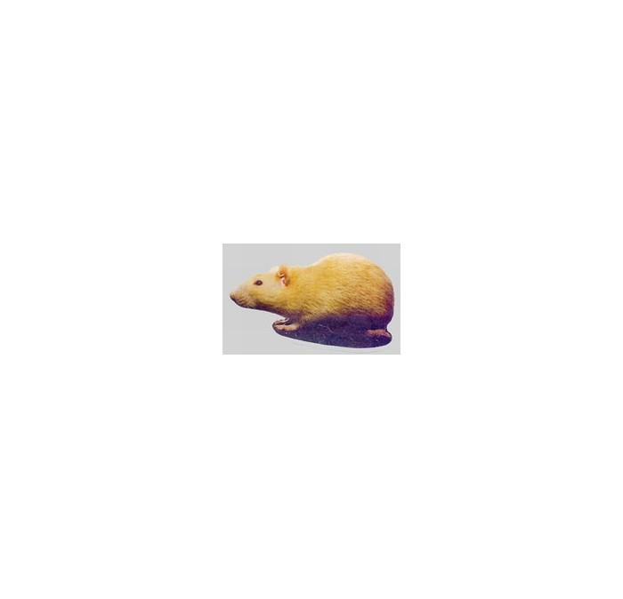 Rat sticker yellow  looking left