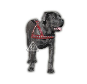Power-Dogs Extreme Harness