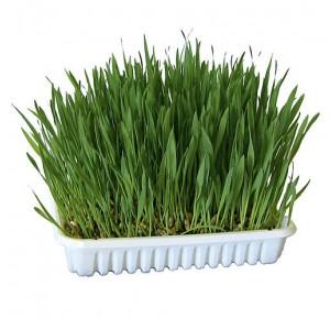 Esve Rodent grass